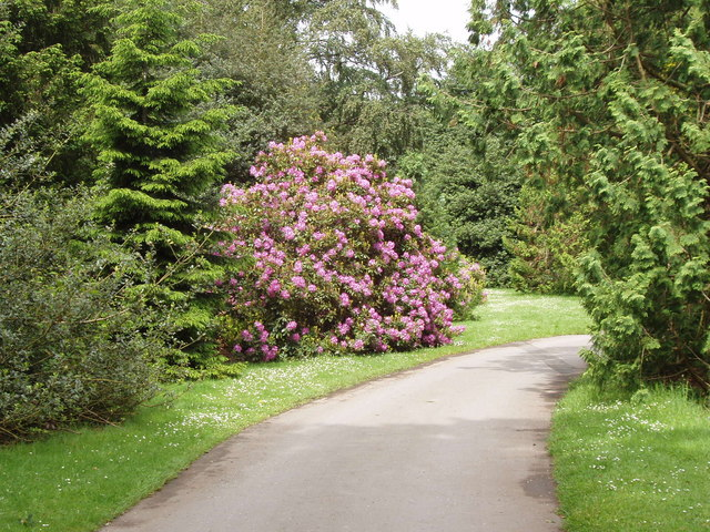 Elegant lane in Kew botanical garden